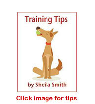Training Tips with Sheila Smith