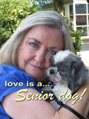 Love is a senior dog